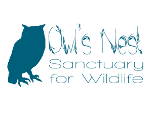 owls nest logo 1 copy